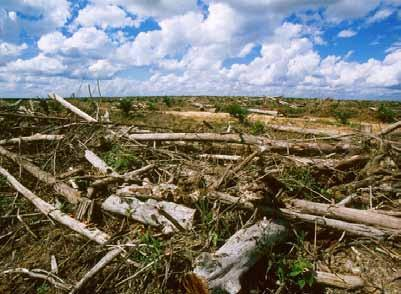 Summary Deforestation is responsible for approximately 17% of global greenhouse gas emissions, and is therefore a major contributor to climate change, but also to the loss of biodiversity and