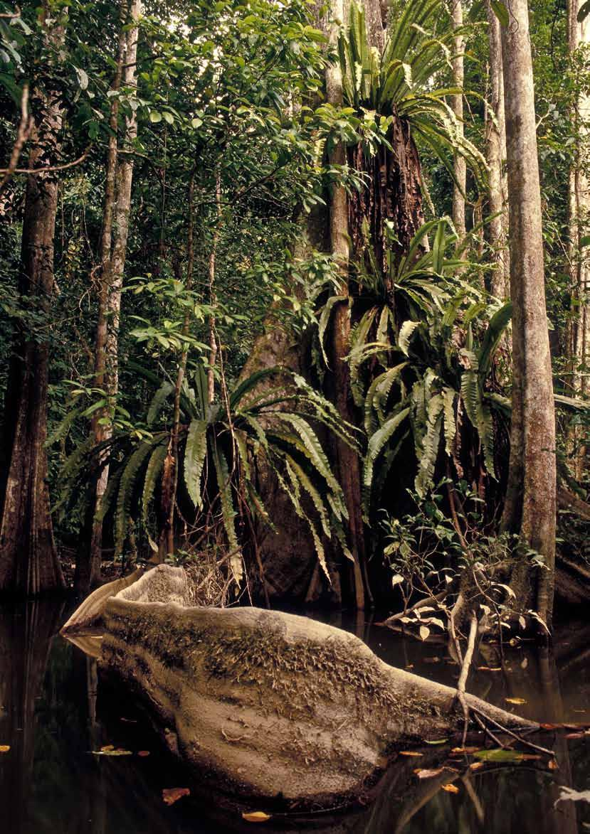 Typical peat swamp forest along the