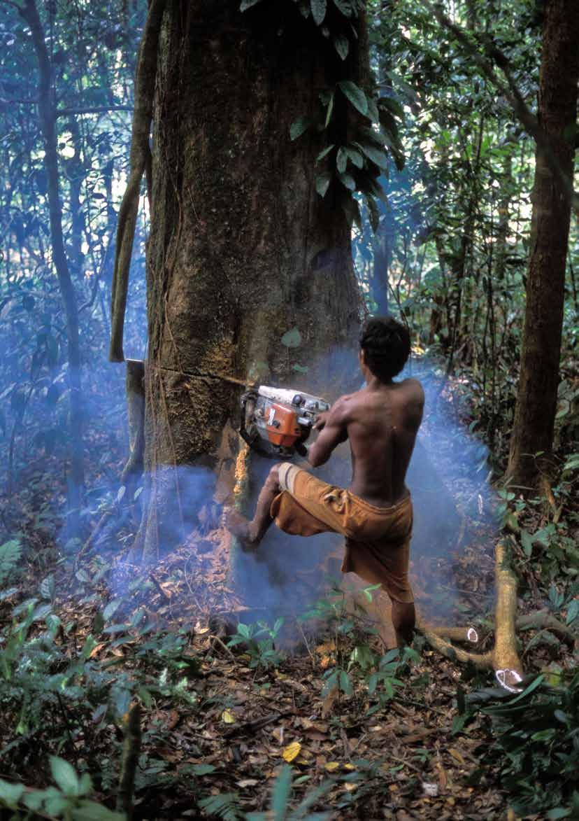 Illegal logging inside the Gunung Leuser National