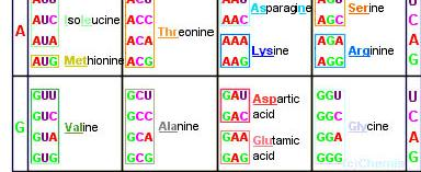 Genetic Code The genetic code dictates nucleic acid structure and function.