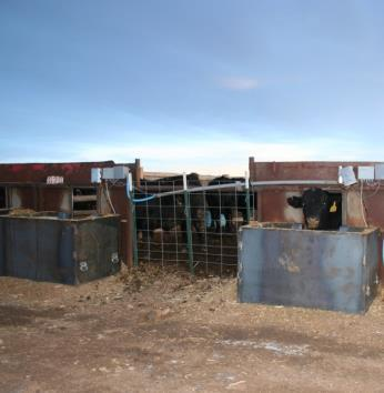 Feedlot Profit Differences How big are the value differences on a 650 pound steer? 35% Conversion 30% Grid 18% Weight 17% Health From as little as $550 to as much as $1175!