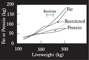 Figure 3a-2. The pattern of fat and protein deposition in early life restriction of feed, followed by unrestricted good quality feed. Figure 3a-3.