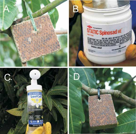 Figure 1. Male annihilation products commercially available in South Africa: (A) Invader-b-lok, (B) Static Spinosad ME, (C) Last call B.I. and (D) B.I. Toolkit vir die beheer van die Oosterse vrugtevlieg.