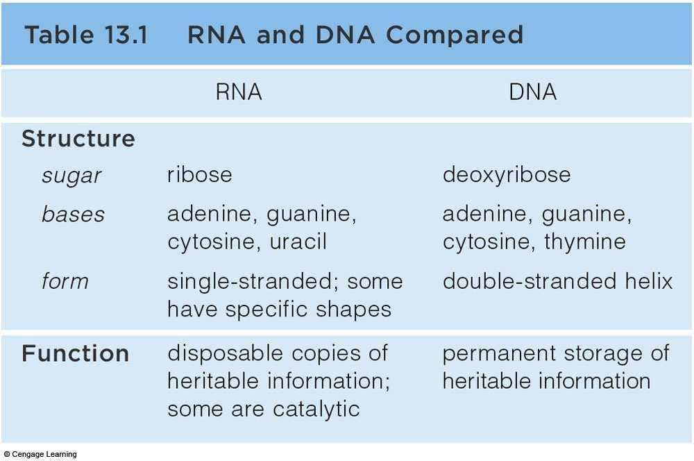 RNA and