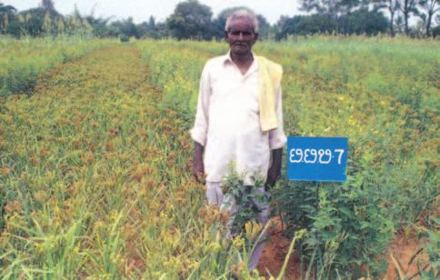 research. Both grain and vegetable legumes were tried in inter and sequence cropping systems. Despite the drought during kharif 2002 in target districts of Karnataka, Tamil Nadu and A.