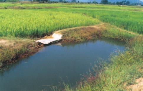 RAINFED AGRO-ECOSYSTEM A small refugee supported with a masonary weir at the end of medium land on farmers field in Orissa the harvested water was used for fish rearing as supplemental irrigation was