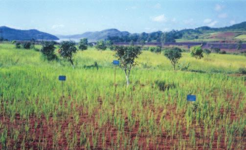 RAINFED AGRO-ECOSYSTEM mango orchard for the comparison of yield and economic returns.