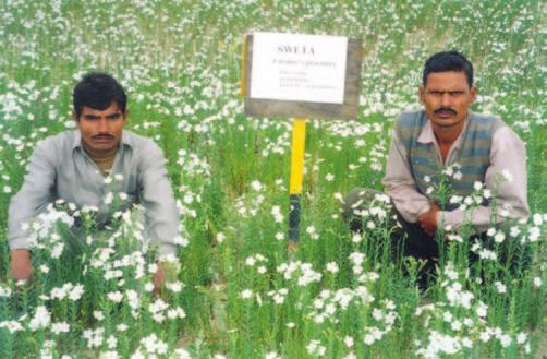 RAINFED AGRO-ECOSYSTEM Performance of linseed var. Swetha on farmers fields (saline) with farmers practice (left) and improved practice (right) at Kanpur varying degrees of salinity.