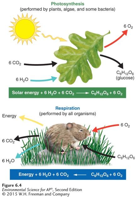 Photosynthesis and Respiration * Photosynthesis and respiration. Photosynthesis is the process by which producers use solar energy to convert carbon dioxide and water into glucose and oxygen.