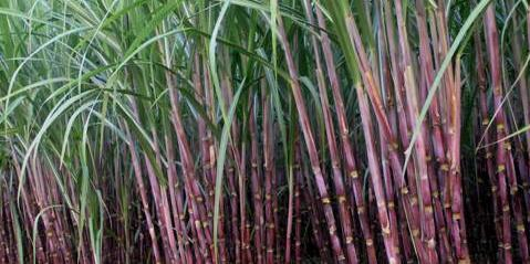 PART - I Water requirement for sugarcane production Water requirement for sugarcane production & sugar