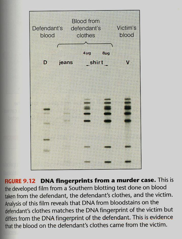 PCR and DNA