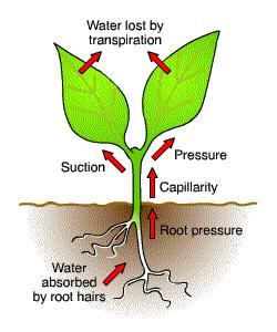 Evaporation and Transpiration