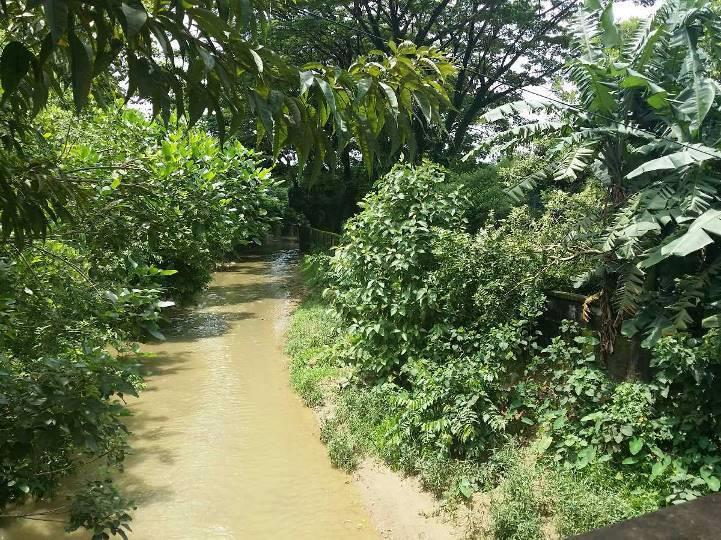 A small drain like canal runs by the side of the office campus which is connected to Bakkhali River and plays important role in draining out storm water from the city.