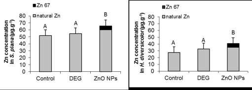 Fate and toxicity effects 67 ZnO NPs Sediment Exposure: Environmental realistic dose: 3 mg.kg -1 (Tiede et al. 2009) 67 Zn Natural abundance: 4.
