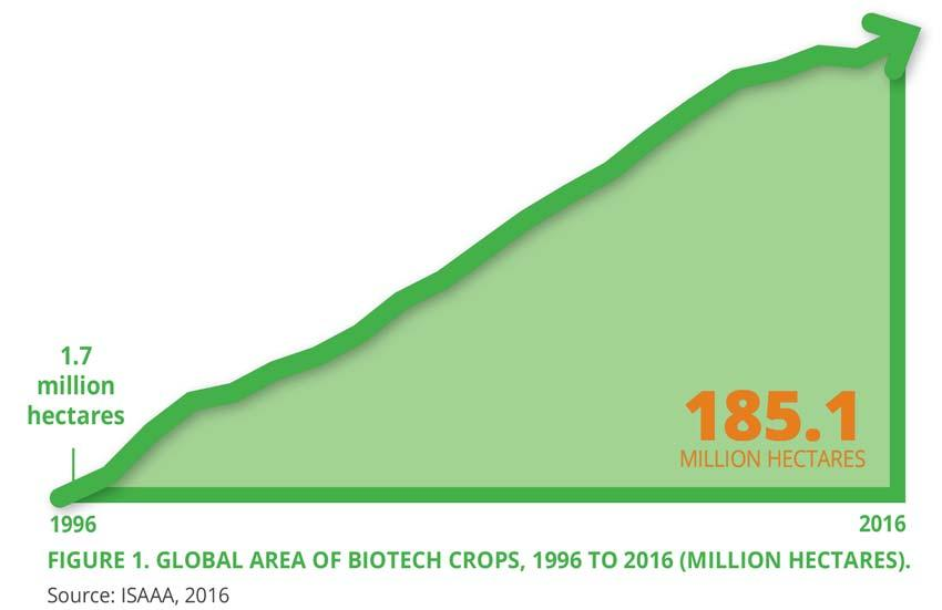 Pocket K No. 16 Biotech Crop Highlights in 2016 In 2016, the 21 st year of commercialization of biotech crops, 185.