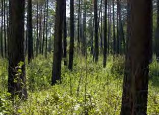 FORESTRY timber acreage 19,700,000 acres 125,000 forest landowners $1.