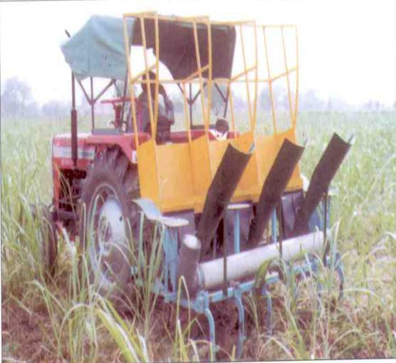 3. WEEDING AND INTERCULTURE Sugarcane requires number of intercultural operations for weed control, moisture conservation and creation of better environment for overall growth of plant.