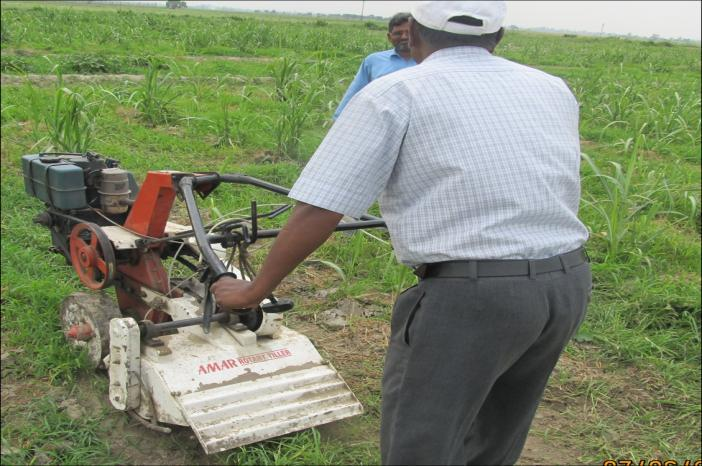 Tractor operated cultivators can effectively be used by adjusting the spacing between the tines as per conventional row spacing.