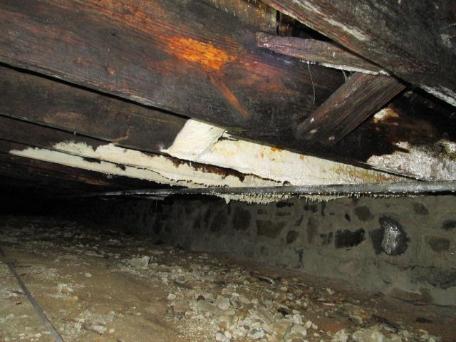 Decayed floor joist with white
