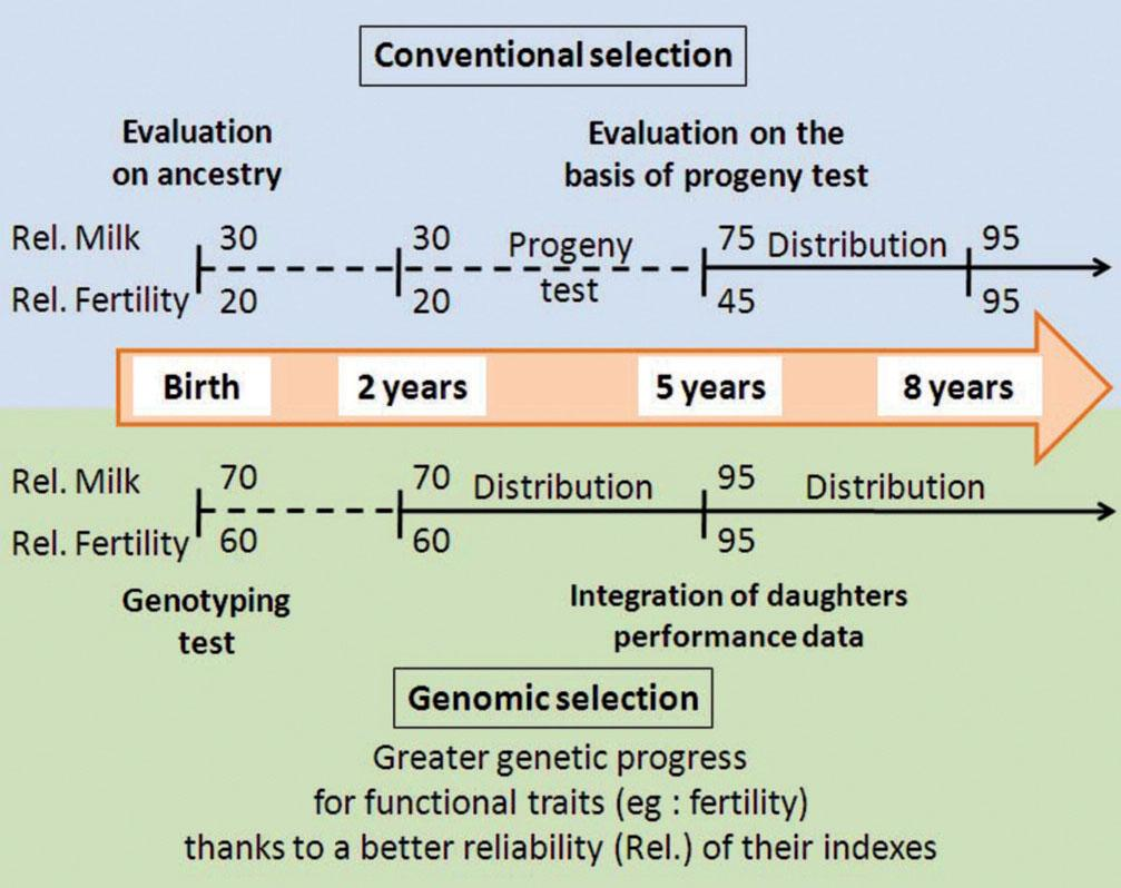 1 A technology-driven revolution The net result is that genomic selection enables to increase greatly annual genetic gain.