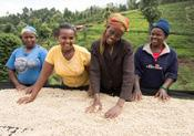 Women farmers According to the Food and Agriculture Organization (FAO), women make up 43% of the agricultural labour force in developing countries.
