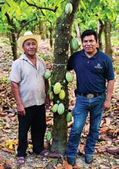 Cocoa Cocoa, the most important ingredient of chocolate, is grown by more than 4.5 million farmers in remote rural regions, and Nestlé uses more than 10% of the world s production.