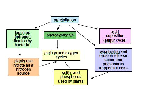 Chapter Two: Cycles of Matter (pages 32-65) 2.