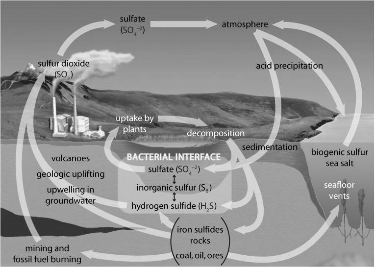 The Sulfur Cycle (pages 46 48) The sulfur cycle is a biogeochemical cycle that shows how sulfur is converted into different forms as it is transported through the air, water, and soil.