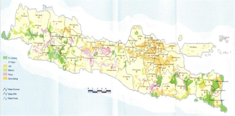 The outbreak of T. beesoni in Java is larger than reported outbreaks in India (References for Indian outbreaks). At the first infestation at the forest district of Semarang, in a 22.