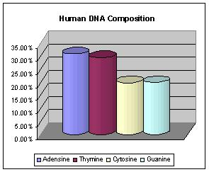 equal l % of adenine and thymine