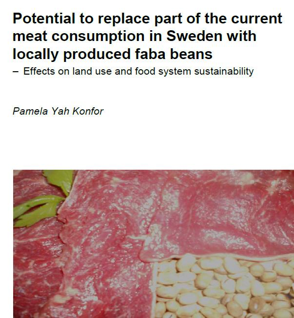 Would you consider faba bean as a side dish with a reduced meat portion?