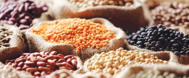 The total share of pulses to total food grains basket in the country in terms of area, production and productivity was 19.62%, 16.55% and 84.48%, respectively during 1950-51.