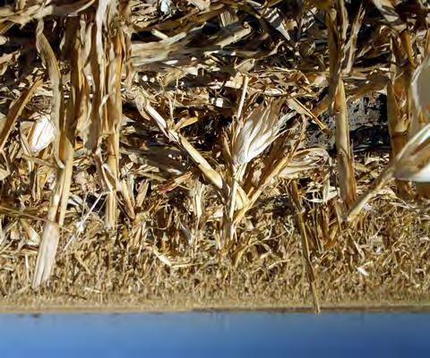 Biomass Emerging Agricultural residues such as corn stover, sugarcane bagasse and wheat