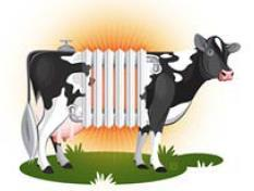 The problem of the dairy cow in the summer is the high heat production Described through 100W lamp (Published in Hoard s Dairyman Magazine, May 2000) A man in rest produce the heat of 1 lamp.