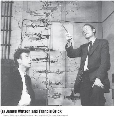 Watson and Crick s Discovery of the Double Helix James Watson and Francis Crick determined that DNA
