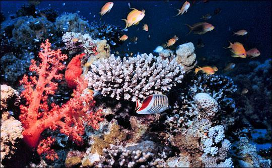 Coral reefs are areas of biological abundance found in shallow, warm tropical waters.