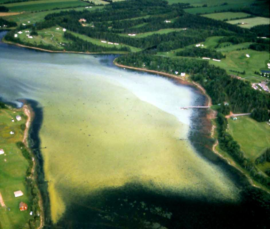 Eutrophication Severe eutrophication / anoxia is a routine issue in 18 estuaries.