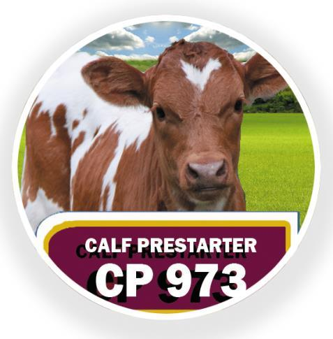 CP Foods Russia: animal feeds PREMIUM-CLASS FEED PRESTARTER FOR CALVES CP973 Prestarter feeds play the ultimate role during the first feeding stage of cattle and our feeding experts developed the