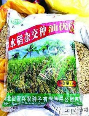 Green Peace Discovery: Transgenic Hybrid Bt Rice Seeds Shan you 63, April, 2005 Samples of rice seeds have been collected from seed companies, farmers and rice millers.