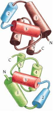 The structures of DNA-binding domain are very similar (434 Cro vs 434 repressor: 48% sequence identity) (434 Cro vs