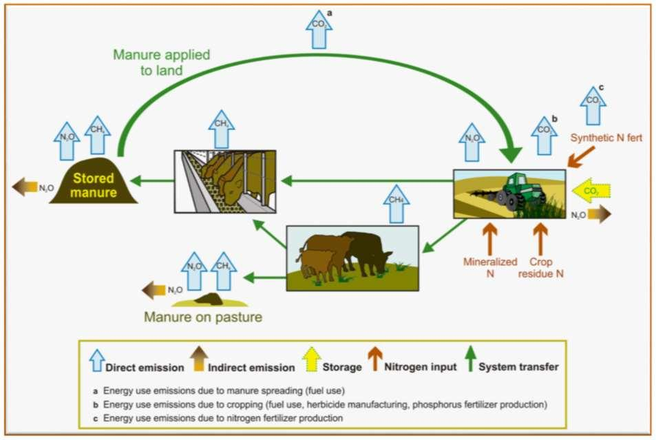 Holos Systems Approach of Estimating GHG Emissions from Farms Inputs Feed
