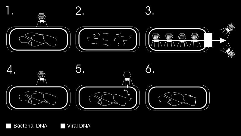 which DNA is
