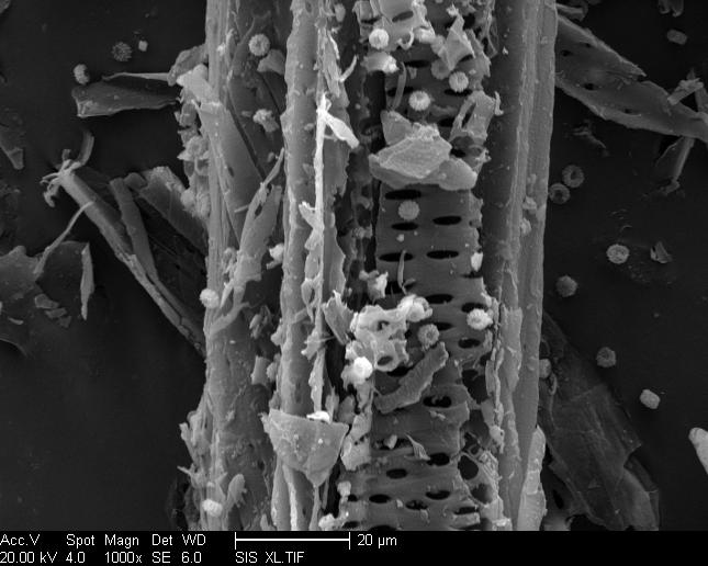 structures. After fermentation using Aspergillus niger, the structure became more rough and some Aspergillus niger spores emerged (Fig. 4b.