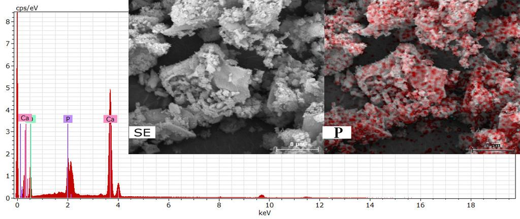 Characterization of sun coral powders. The XRD patterns (Fig.