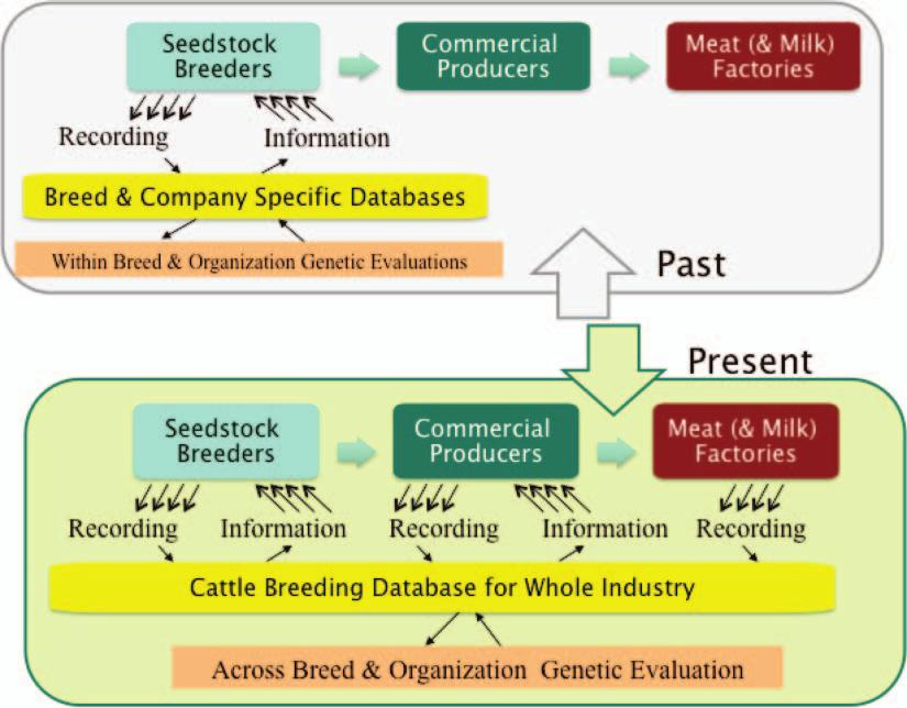Figure 2. Past versus present information infrastructure of Irish beef cattle breeding.