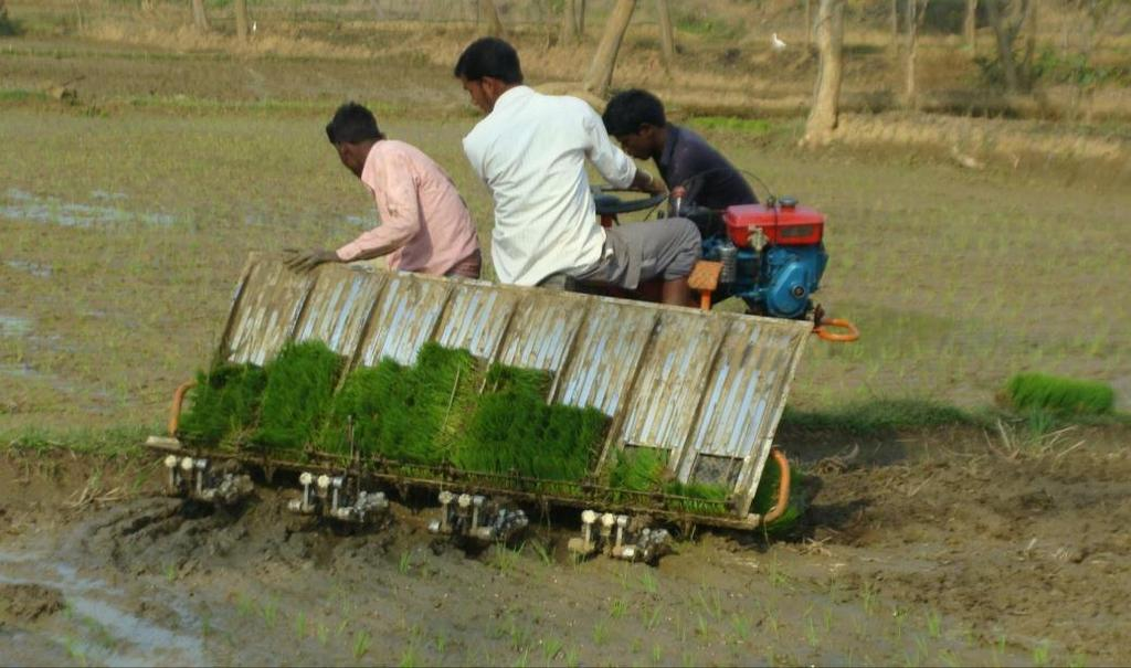 Direct-sowing of aerobic rice