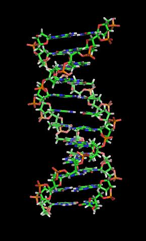 Genes A gene is a section of DNA that causes the production of a protein.
