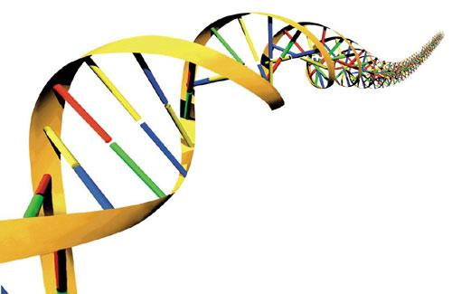 DNA There are 4 bases A,T,C,G.