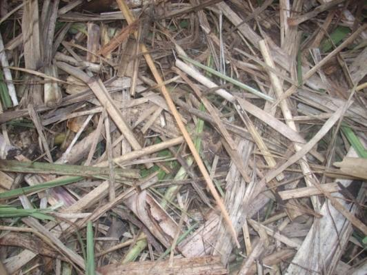 Reduction of percolation index in cane diffusers; and Possible changes