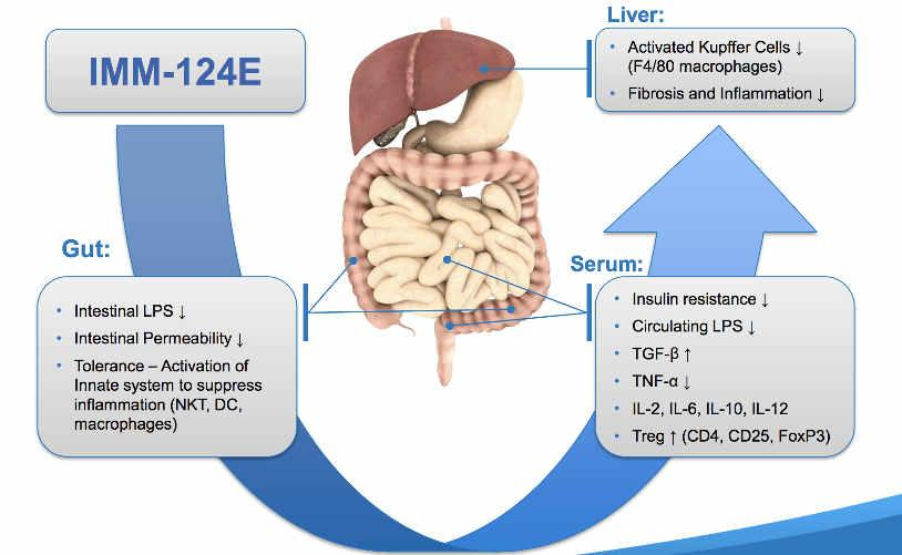 Source: There is strong support for the clinical benefit of IMM-124E in the treatment of fatty liver diseases.